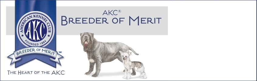 neapolitan mastiff top breeder award
