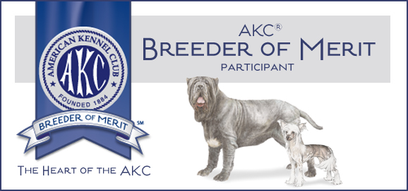 neapolitan mastiff breeder merit award